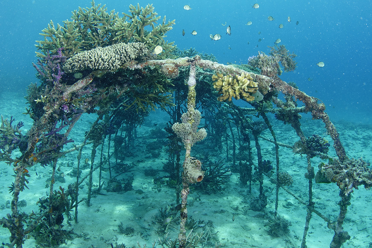 Erosion is reversible - Learn How Biorock Works with Natural Reefs at Gangga Island