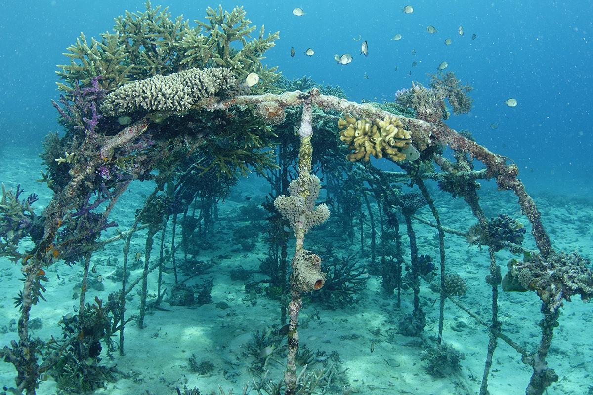 Biorock reefs at Gangga Island, North Sulawesi, Indonesia