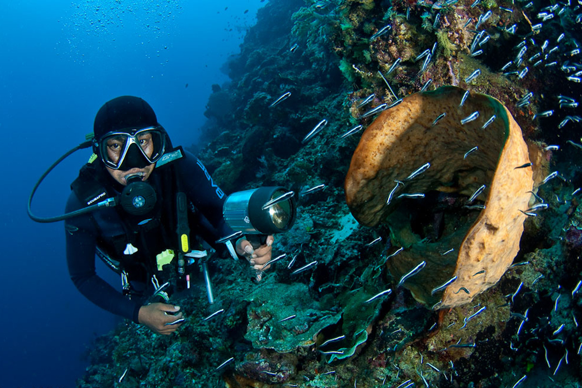 Up Your Diving Skill Level with PADI Specialty Courses