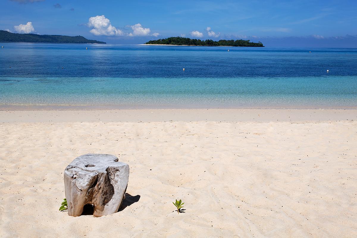 Where you Can We See Mandarinfish? Lihaga and Gangga Island