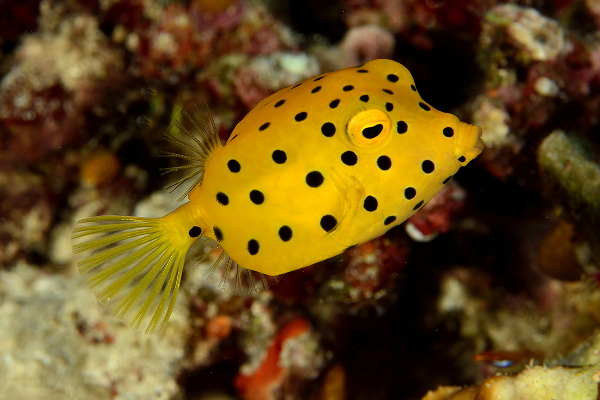 10 Incredible Dive Sites in the Bangka Archipelago