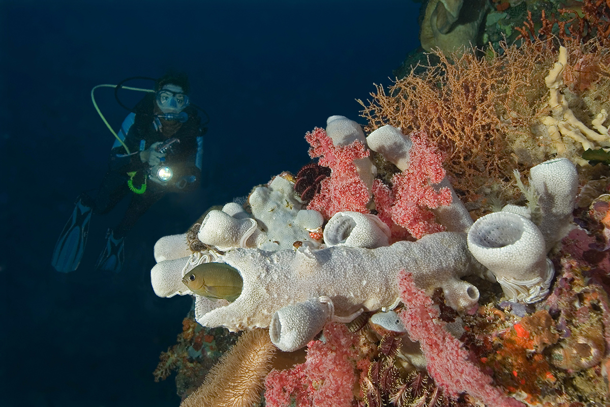 Diving in Bangka and Talisei Islands, North Sulawesi