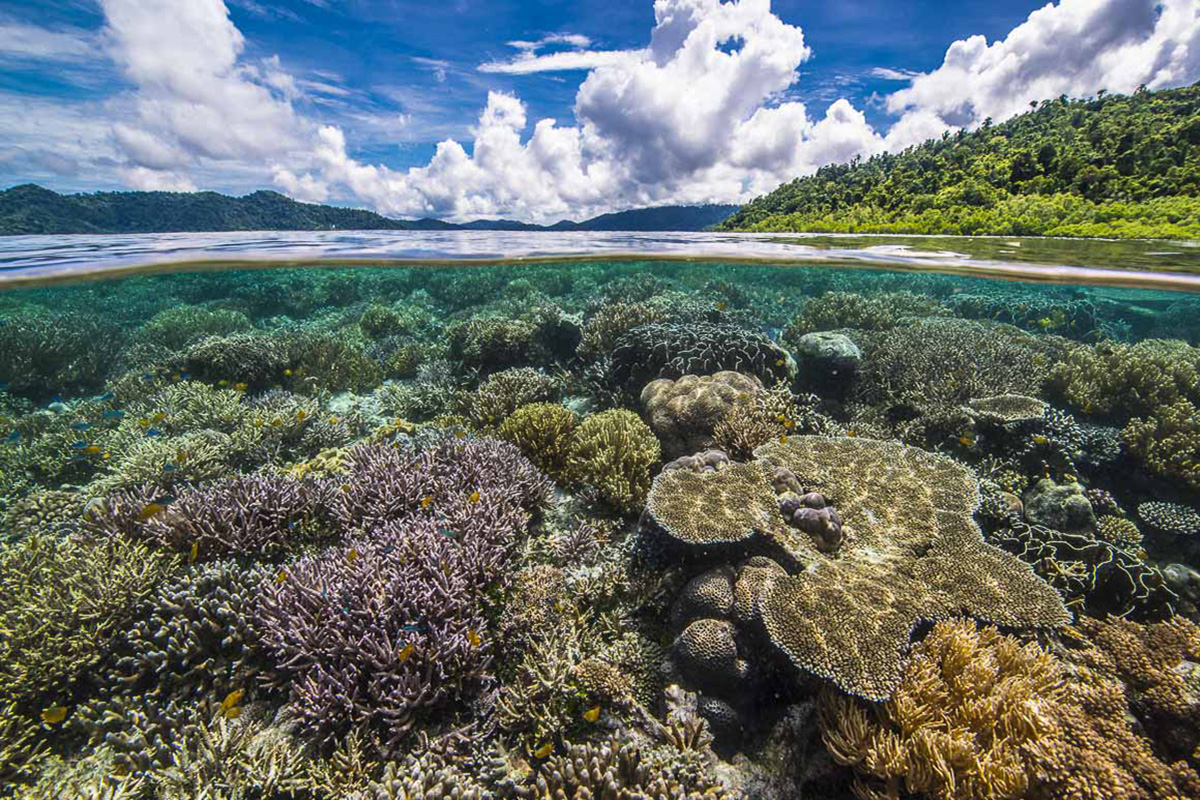 Why do we need coral reefs?