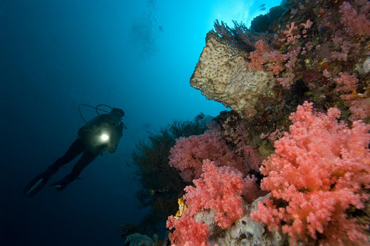 Night Diving at Gangga Island, North Sulawesi