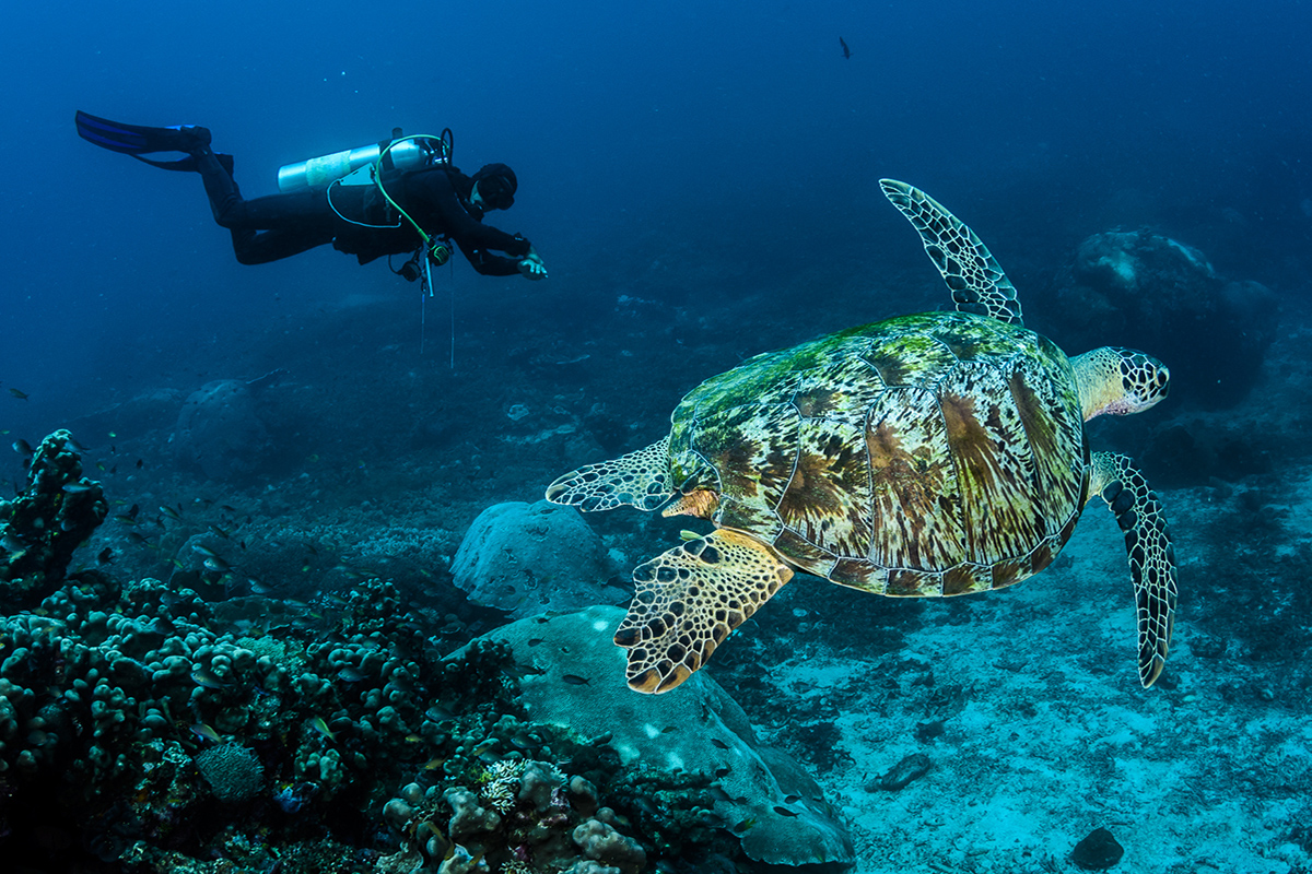 Debunking 10 Myths About Scuba Diving
