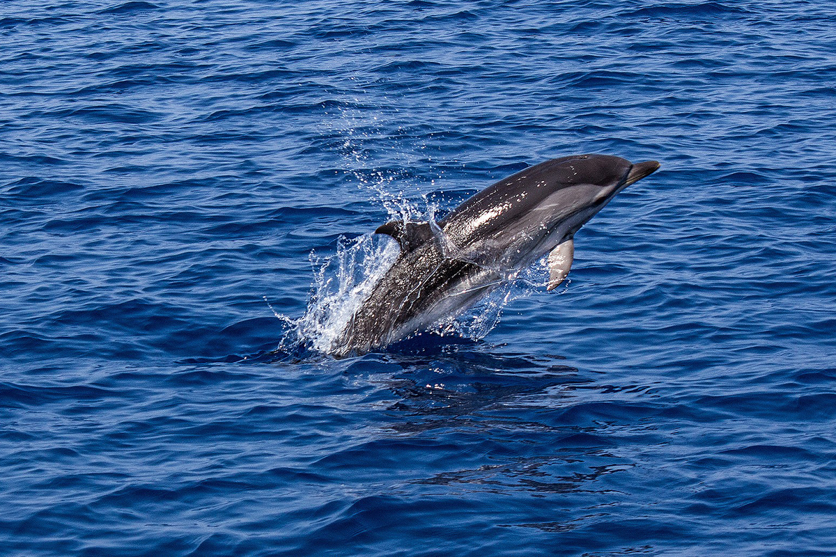 Meet the Whales and Dolphins of North Sulawesi