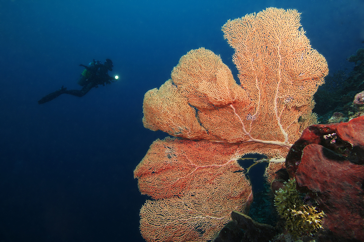 6 Interesting Facts About Hard Corals