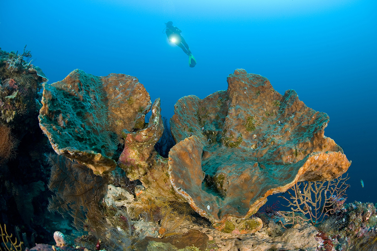 Diving in North Sulawesi Indonesia