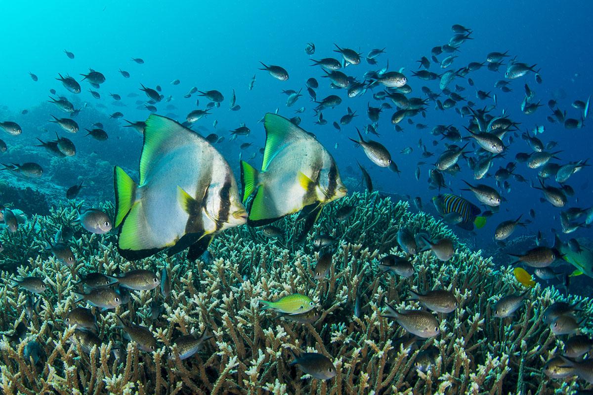 Colourful reef fish at Tanjung Tarabitan