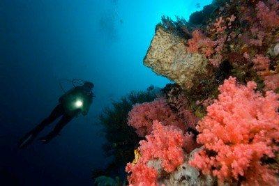 22 Gangga-Divers UW
