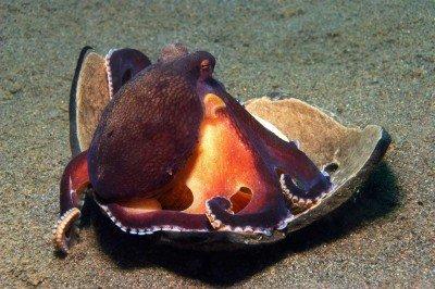 48 Gangga-Divers UW