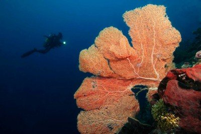 53 Gangga-Divers UW