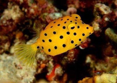 56 Gangga-Divers UW