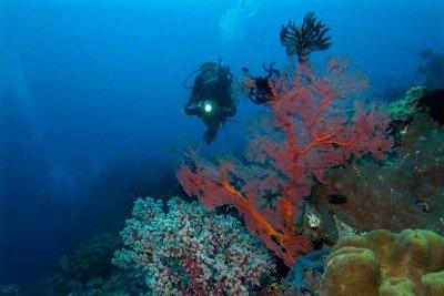 62 Gangga-Divers UW