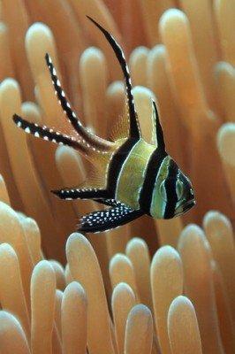 diving 05