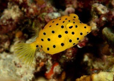 diving 07